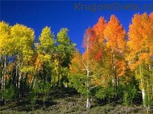 Куда поехать отдохнуть - леса России