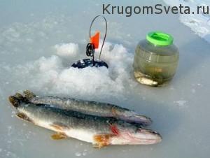 Куда поехать отдохнуть - зимний лов хищной рыбы