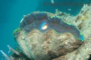 Баръерный риф-Путешествие по Австралии