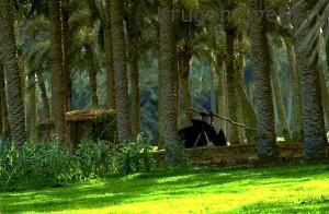 Проводим отпуск в Египте