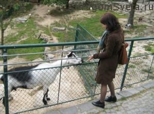 Линц Австрия - в зоопарке