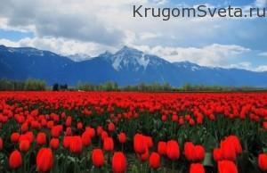 http://flowers.ua