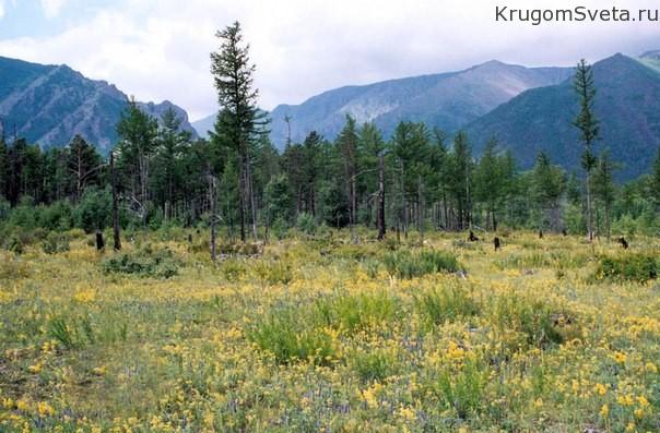 kedrovo-listvennichnyie-lesa