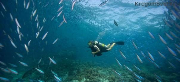 dusit-thani-maldives-dajving