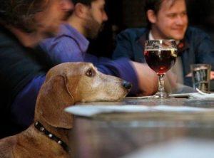 Во французском Лилле открылось «собачье кафе»