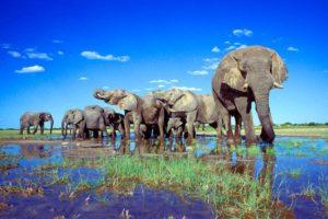 etosha_national_park_namibia03