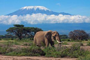 slon-na-fone-gory-kilimandazhro