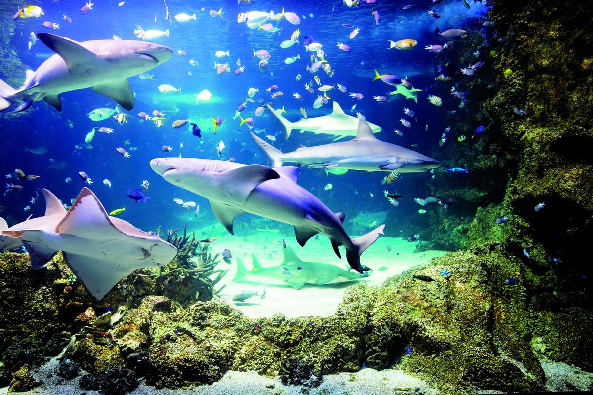огромный аквариум Сиднея