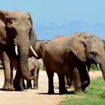На туристов во время сафари в ЮАР напал слон