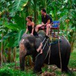 В Таиланде слон сломал туристке ногу