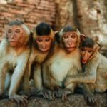 В Таиланде для туристов ввели правила общения с обезьянами