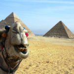 Россияне не полетят в Египет даже на чартерах