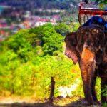 Агрессивный слон напал на туристов в Таиланде