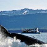 В Японии туристический катер столкнулся с китом