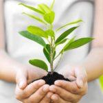 Отель в Финляндии предоставит скидки за посаженное дерево